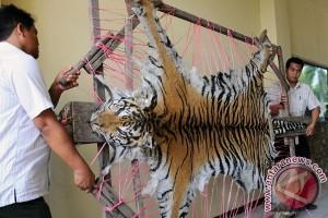 Polisi Sumsel bongkar jual-beli kulit harimau
