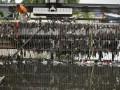 Petugas membersihkan sampah di sekitar pintu air Waduk Pluit, Jakarta Utara, Kamis (24/1). Pemerintah Provinsi DKI Jakarta telah menyiapakan anggaran sebesar 1 triliun rupiah untuk menormalisasi Waduk Pluit, karena kedalaman saat ini hanya 2-3 meter karena endapan lumpur dan sampah, serta menyempit karena banyak bangunan liar di sekitar waduk. (FOTO ANTARA/Yudhi Mahatma)