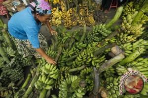 Mahasiswa manfaatkan kulit pisang untuk membuat tisu