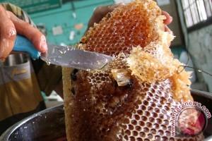 Peladang hutan Tulungagung budidaya lebah klanceng