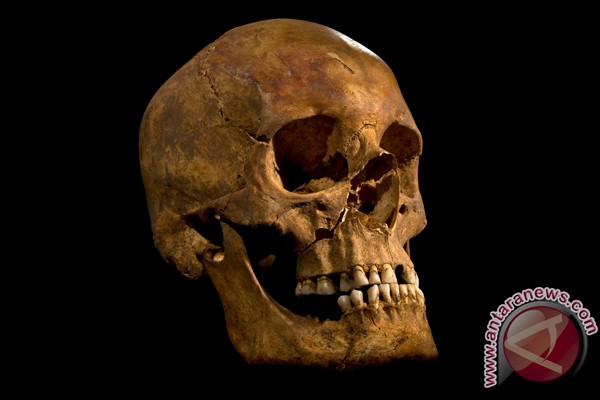 Peneliti: kerangka Raja Richard III ditemukan di lahan parkir