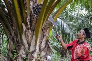 10.000 hektare hutan Sumsel jadi kebun sawit