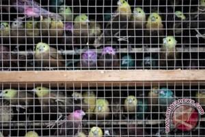 40 juta pelajar India berjanji akan selamatkan burung pipit