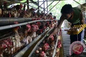 NTT perketat pemasukan telur unggas