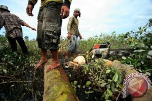 8.233 hektare lahan mangrove Pohuwato beralih fungsi
