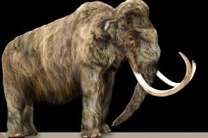 Arkeolog gali fosil mammoth yang terkubur dekat Mexico City