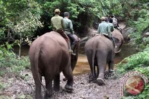 Toyota ikut danai proyek konservasi WWF