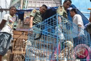 Satwa dilindungi banyak dijual di Pasar Pramuka dan Jatinegera