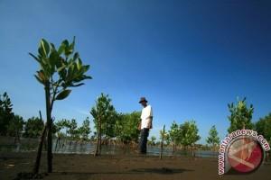 Cilacap akan tanam 25.000 mangrove tahun depan