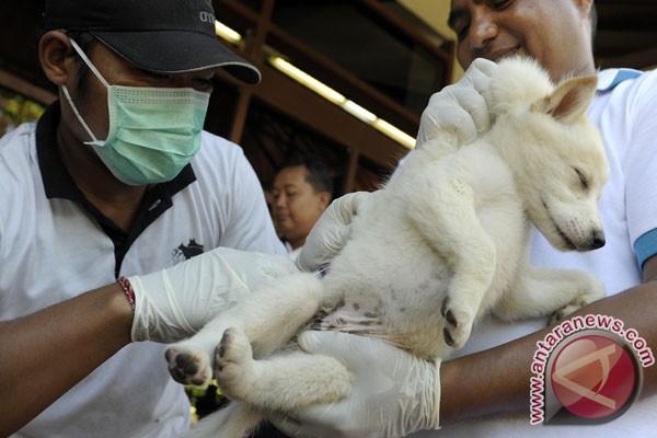 Sulteng kehabisan persediaan vaksin rabies