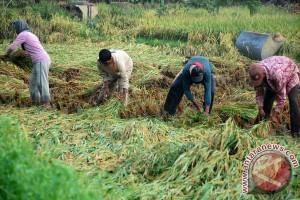 Kementan: Kesejahteraan petani terus membaik