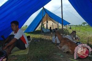 Pengungsi banjir Demak mulai kembali ke rumah