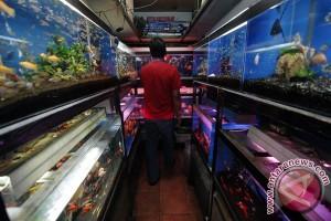 Ekspor ikan hias Bali naik 55,88 persen