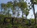 Pekerja membawa batang kayu Jati sitaan Perhutani dan Kepolisian sebagai barang bukti, di Perum Perhutani KPH Tasikmalaya, Desa Mandalajaya, Kecamatan Cikalong, Tasikmalaya Jabar, Rabu (22/5). Sebanyak 1.600 pohon jati milik Perum Perhutani KPH Tasikmalaya di rusak oleh salah satu ormas tidak bertanggung jawab dan kerugian negara ditaksir mencapai 1,1M. (ANTARA FOTO/Adeng Bustomi)
