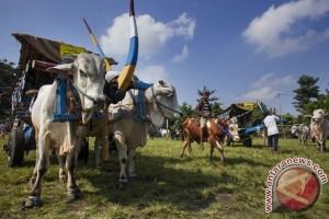 DIY kembali gelar Festival Gerobak Sapi Wisata