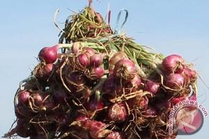 Harga bawang merah di Jayapura capai Rp65 ribu/kg