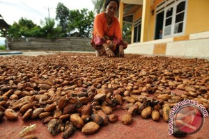 Masyarakat kakao Sultra siap hadapi MEA
