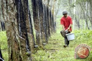 ITRC sepakat kurangi ekspor karet alam