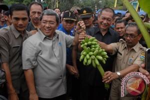 """PTPN XII ekspor pisang """"Kirana"""" ke China"""