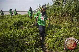 Warga Desa Percut olah mangrove untuk mitigasi iklim