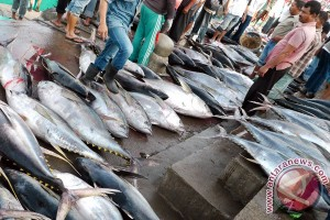 Tangkapan ikan tuna di Lebak melimpah