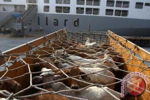 Puasa belum mulai harga daging sapi di Purwokerto Rp120.000/kg