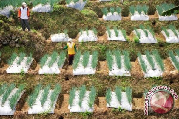 Kementan ingin setiap pulau miliki sentra hortikultura