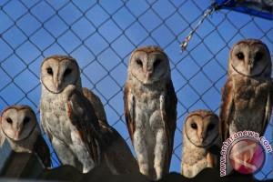 Bantul kembangkan taman wisata penangkaran burung