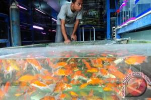 Pembudidaya ikan rugi akibat anomali cuaca