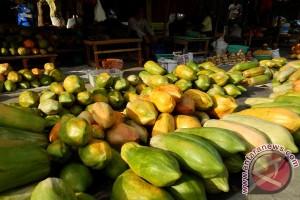 Pepaya california Lebak dilirik toko pasar serba ada Jakarta