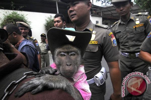 Komentar warga Jakarta soal razia topeng monyet