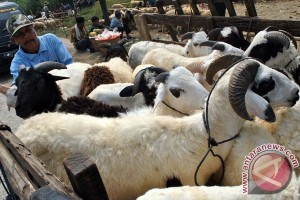 Di sini, kambing kurban sepi pembeli