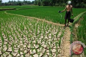 Kekeringan hantui daerah lumbung padi Karawang