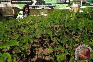 Artha Graha sumbang 1.000 pohon pada HPN 2016