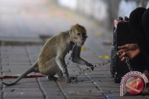 Pawang topeng monyet  keberatan hanya diganti Rp1 juta
