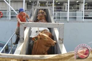 LIPI : pemerintah harus batasi impor daging sapi