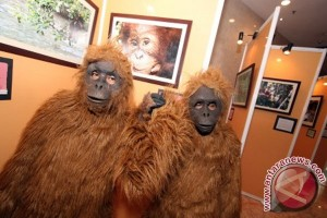 Kampanye Penyelamatan Orangutan