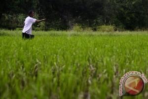 Penduduk miskin Lampung Selatan berkurang