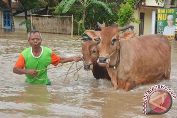 Banjir di Jember semakin meluas
