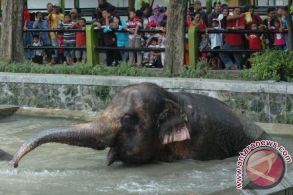 ) - Wali Kota Surabaya Tri Rismaharini menilai kondisi Kebun Binatang