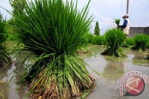Pupuk Indonesia siap amankan musim tanam