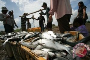 Sulsel target produksi budidaya ikan laut naik 5,4 persen