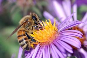 Eropa kekurangan miliaran lebah penyerbuk