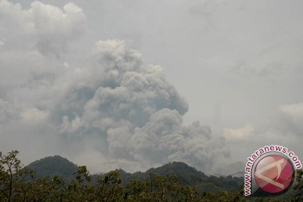 Protected forests destroyed by Mt Kelud`s eruption