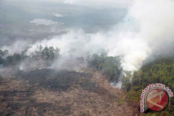 28.000 warga Riau sakit akibat asap