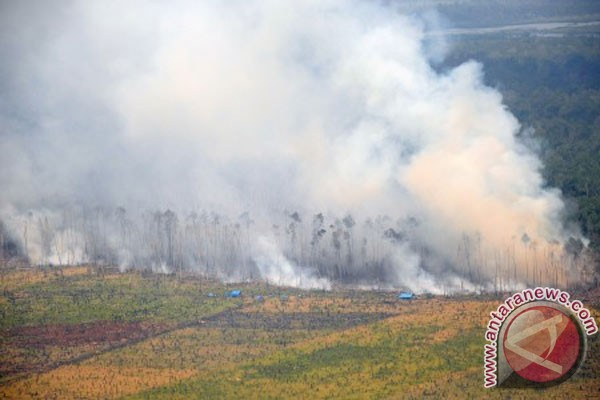 Fires scorch 6,000 hectares of land, forests in Riau