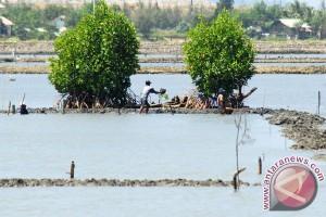 80 persen Cagar Alam Tanjung Panjang di Pohuwato berubah jadi tambak