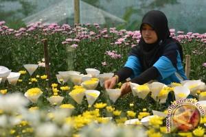Istri Wapres kunjungi kebun krisannya di Malino