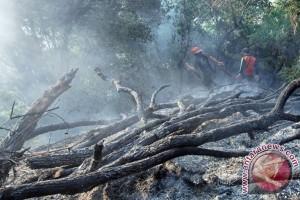 Kebakaran Hutan Padang