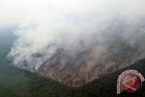 Kemen LH lakukan investigasi penyebab kebakaran lahan